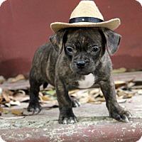 Adopt A Pet :: Charlie - Dalton, GA