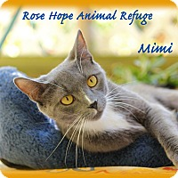 Adopt A Pet :: Mimi - Waterbury, CT