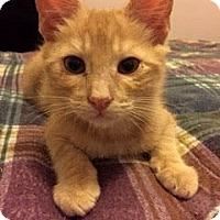 Adopt A Pet :: Spark - Chandler, AZ