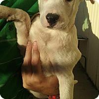 Adopt A Pet :: Travis - Aurora, CO