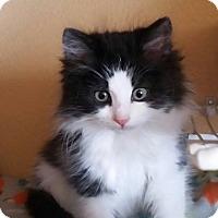 Adopt A Pet :: Button - Rosamond, CA