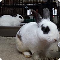 Adopt A Pet :: Ellen and Morris - Williston, FL