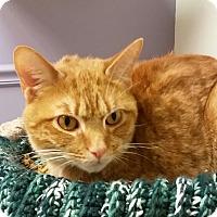 Adopt A Pet :: Sully - Medina, OH