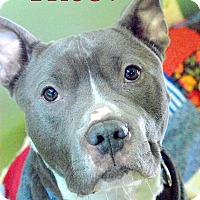 Adopt A Pet :: Theo - Manchester, NH