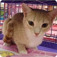 Adopt A Pet :: Nesme & Esme - Chesapeake, VA