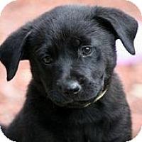 Adopt A Pet :: Glow - Austin, TX