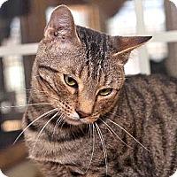 Adopt A Pet :: Eeazi - Davis, CA