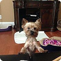 Adopt A Pet :: Rufus - Charlotte, NC