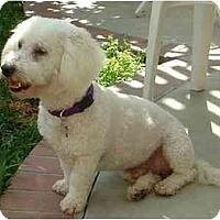 Adopt A Pet :: Kobie - La Costa, CA