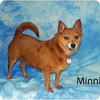 Adopt A Pet :: Minnie - Ft. Myers, FL