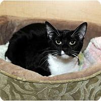 Adopt A Pet :: Jada - Farmingdale, NY