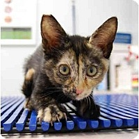 Adopt A Pet :: Wendy - Modesto, CA