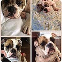 Adopt A Pet :: Pepper - Cibolo, TX