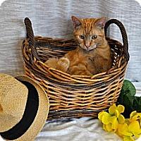 Adopt A Pet :: Tiger - Del Rio, TX
