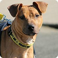 Adopt A Pet :: Nash - Southampton, PA