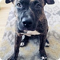 Adopt A Pet :: Brenda - Los Angeles, CA