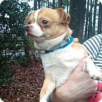 Adopt A Pet :: Bart - Lebanon, CT