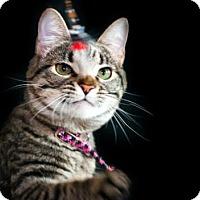 Adopt A Pet :: Thumbelina - Healdsburg, CA