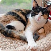 Adopt A Pet :: Mandy - Alameda, CA