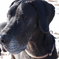 Adopt A Pet :: Titan - Reno, NV