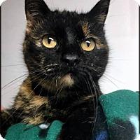 Adopt A Pet :: Zelda - Ottumwa, IA