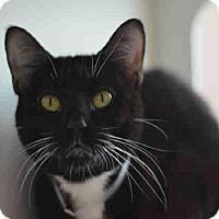 Adopt A Pet :: Sabrina - New York, NY