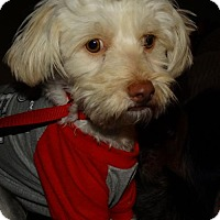 Adopt A Pet :: Asia - Tacoma, WA