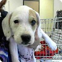 Adopt A Pet :: RICKY - Conroe, TX