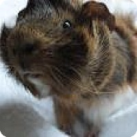 Adopt A Pet :: Archie - Edmonton, AB