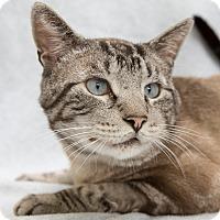 Adopt A Pet :: Trooper - Fort Collins, CO