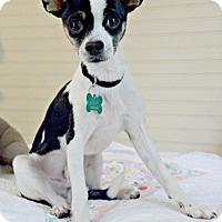 Adopt A Pet :: Quincy - Chester, CT
