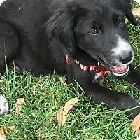Adopt A Pet :: Mary - Thousand Oaks, CA