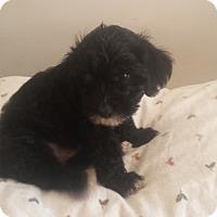 Adopt A Pet :: Essie - Lodi, CA