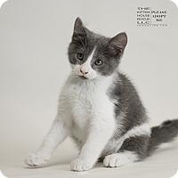 Adopt A Pet :: HENDERSON - Houston, TX
