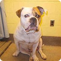 Adopt A Pet :: DRO - Upper Marlboro, MD