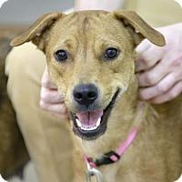 Adopt A Pet :: Tessa Topaz - Kettering, OH