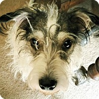 Adopt A Pet :: Baxter in Corsicana - Austin, TX