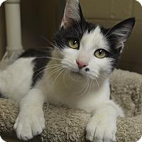 Adopt A Pet :: Amethyst - Germantown, TN
