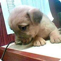 Adopt A Pet :: ALLYSA - Conroe, TX