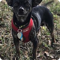 Adopt A Pet :: Sergio - Davie, FL