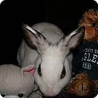 Adopt A Pet :: Emily - Conshohocken, PA