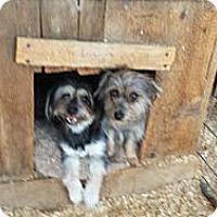 Adopt A Pet :: Pippi - San Dimas, CA