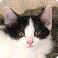 Adopt A Pet :: JAIMA - 2013 - Hamilton, NJ
