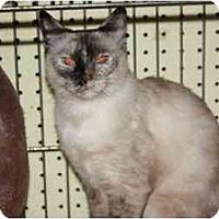 Adopt A Pet :: Kit Kat - Owasso, OK