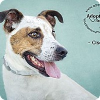Adopt A Pet :: Cisco - Phoenix, AZ