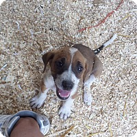 Adopt A Pet :: Ginger - Chewelah, WA
