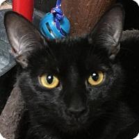 Adopt A Pet :: Boo - Winchester, CA