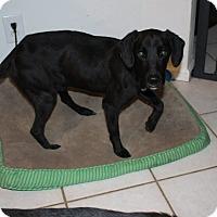 Adopt A Pet :: Coach - Virginia Beach, VA