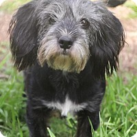 Adopt A Pet :: Kyla - Helotes, TX