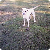 Adopt A Pet :: Trooper #2 - Graceville, FL